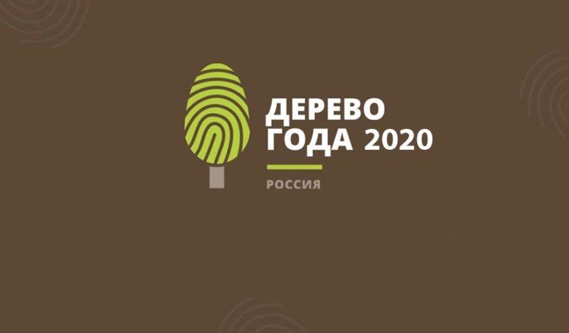 Национальный конкурс «Российское дерево года 2020»